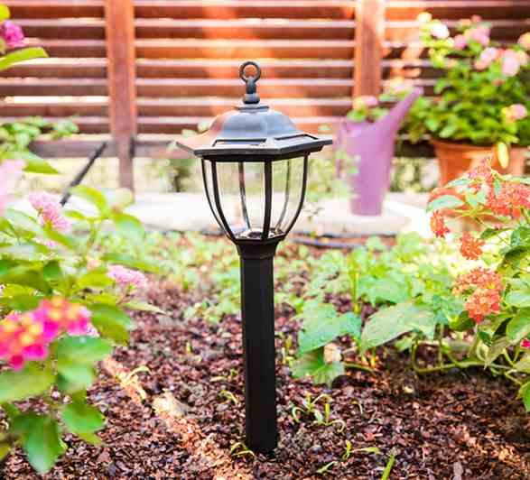 Com cuidar la llum solar del jardí?